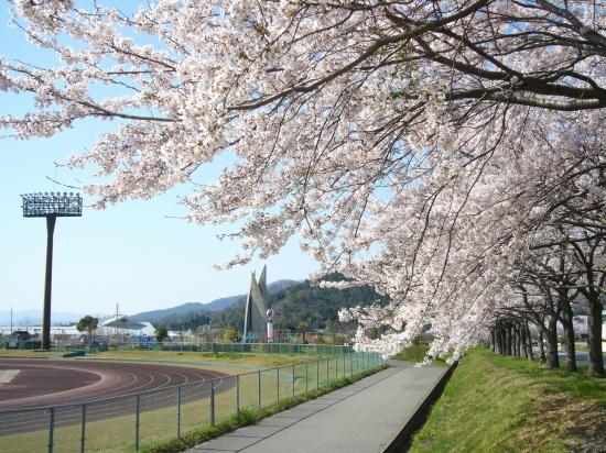 Sakura009